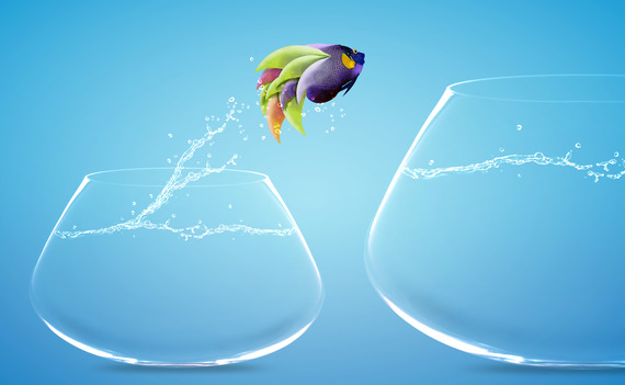 fish-jumping-to-other-bowl-xs