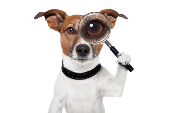 photodune-2584346-searching-dog-with-magnifying-glass-xs